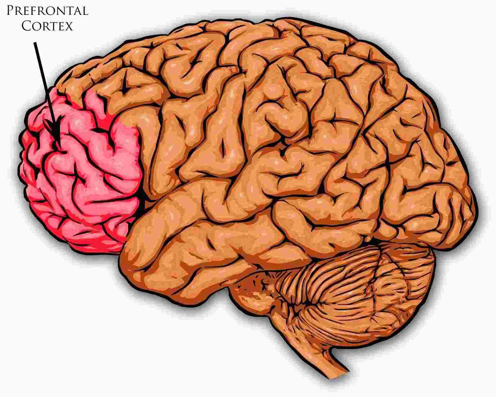 Astronaut Abby_How to Stop Procrastinating Today_Prefrontal Cortex_The Mars Generation