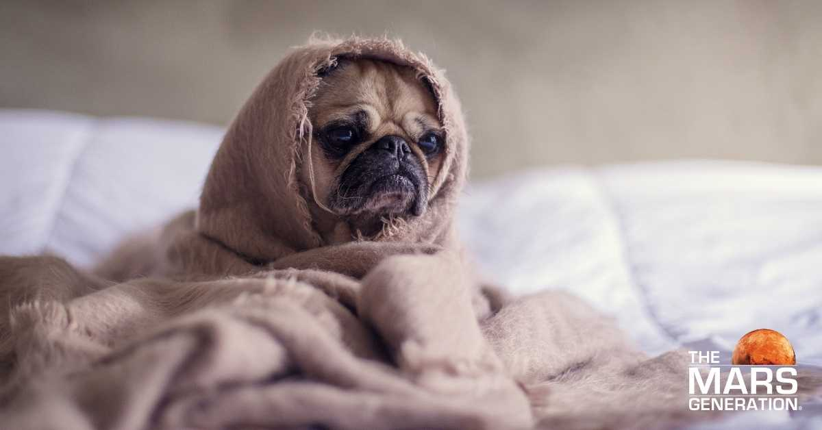 Astronaut Abby_How to Stop Procrastinating Today_Sad and Tired Pug_The Mars Generation